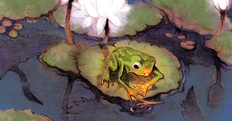 Profesia, orange frog, žaba, pozitívne myslenie